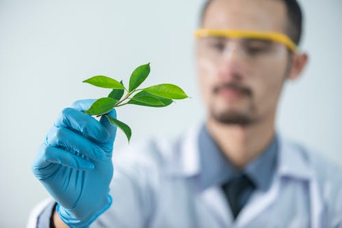 Man in a lab looking at leaves